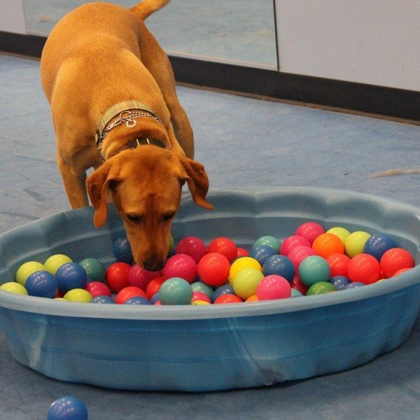 Dog Behavioral Evaluations, dog behavior assessment, quality k9, tino reinke, angelika clark