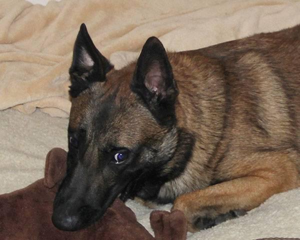dog behavior modification, dog behavior training, quality k9, tino reinke, angelika clark