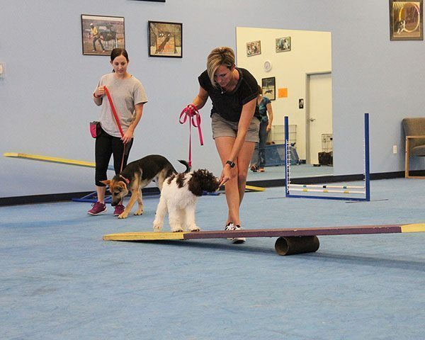 dog training classes, dog lessons, quality k9, tino reinke, angelika clark