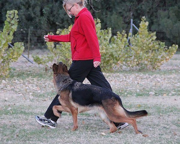off leash dog training, dog training in phoenix, quality k9, tino reinke, angelika clark