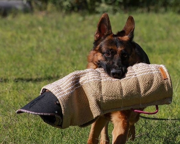 Best Dog Trainers Scottsdale