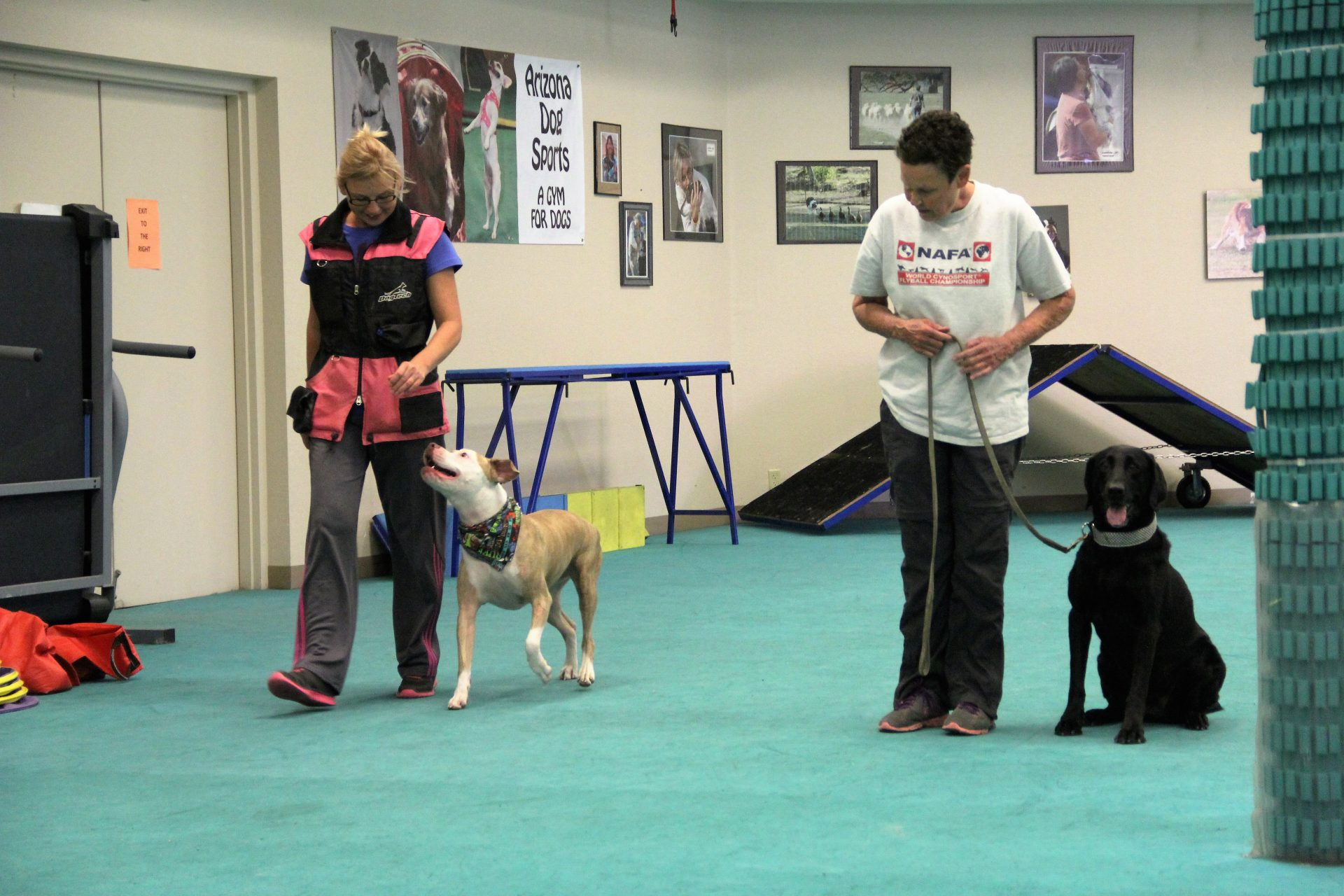 Dog training clients