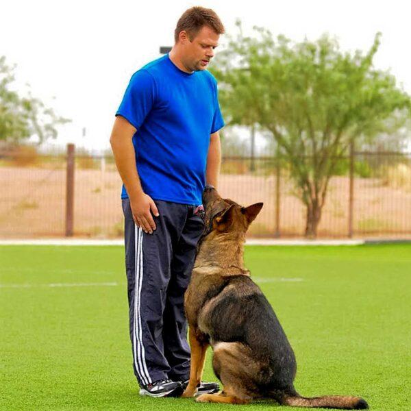 Working Dog Training Glendale