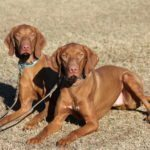 dog training reviews, quality k9, dog trainer reviews phoenix, dog training reviews scottsdale